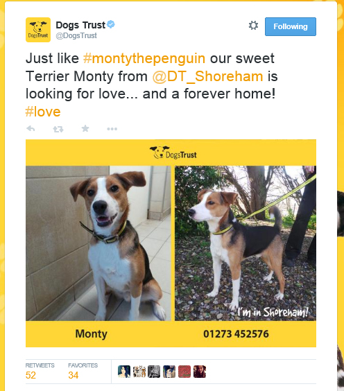 Tweet: Just like #montythepenguin our sweet Terrier Monty from @DT_Shoreham is looking for love... and a forever home! #love