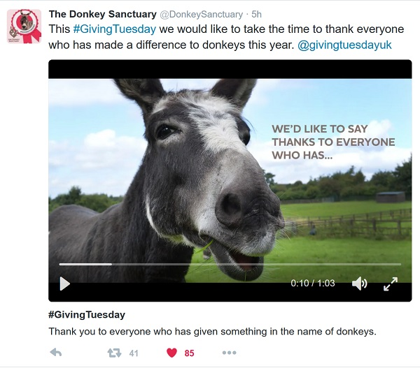 Video of still photos of donkeys