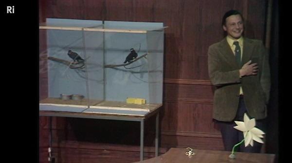 RI: David Attenborough with minor birds from 1973