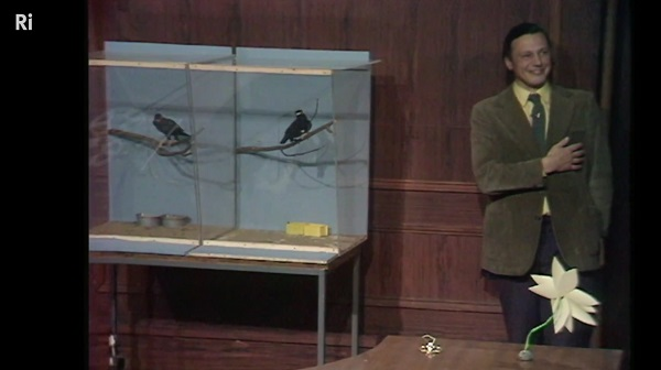 RI: David Attenborough with minor birds from 1973
