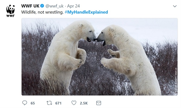 #MyHandleExplained tweet from WWF showing fighting polar bears