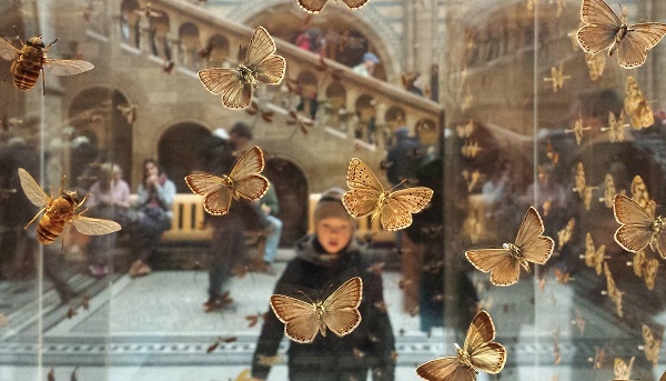 View through a glass case of butterflies, we see a child with open mouth in amazement. At the Natural History Museum