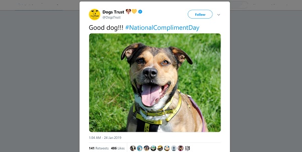 Dogs Trust tweet with almost 500 likes. Image: smiling dog. Text says 'Good dog!!! #NationalComplimentDay'