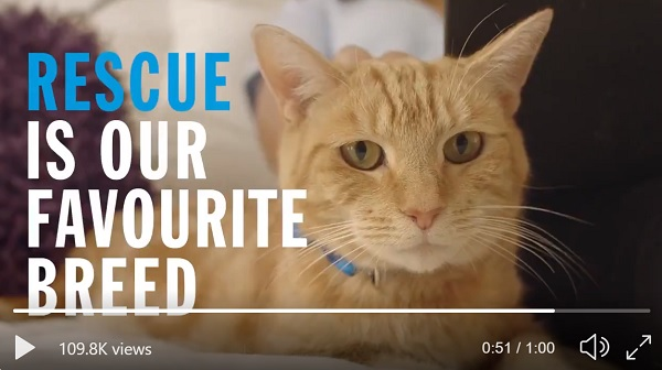 Ginger cat from Battersea's ad - rescue is our favourite brand